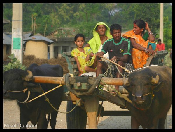 11-Madhes family on ox cart