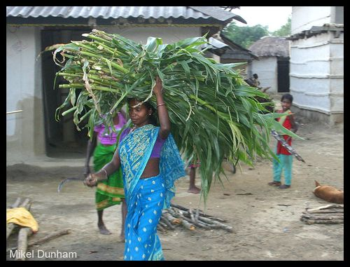 1-Madesh woman with fodder