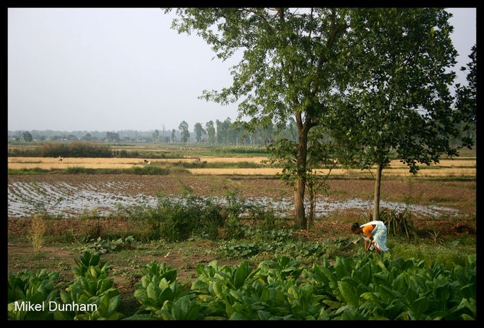 -in the Madhes