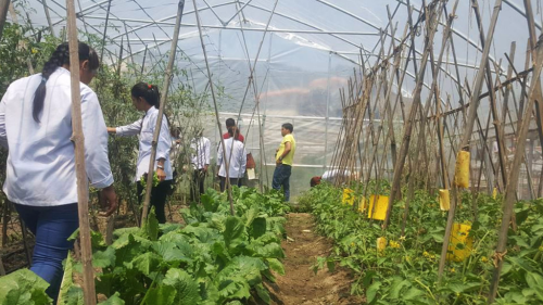 7-greenhouse with staff